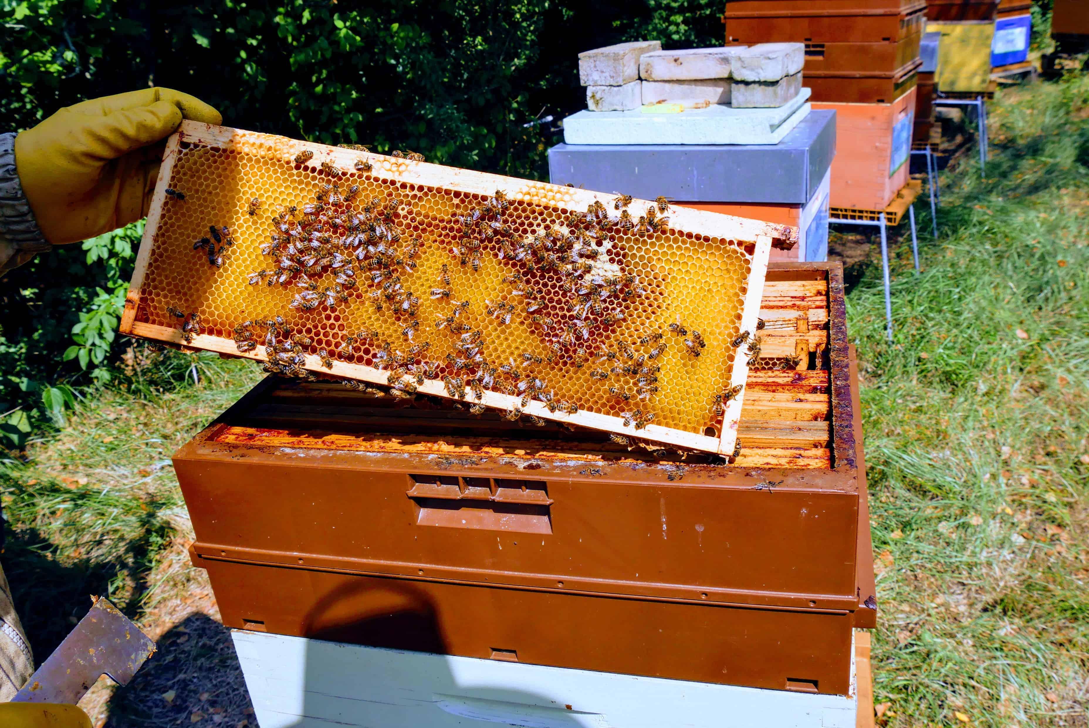 Wordbee-Beehive-2018-2