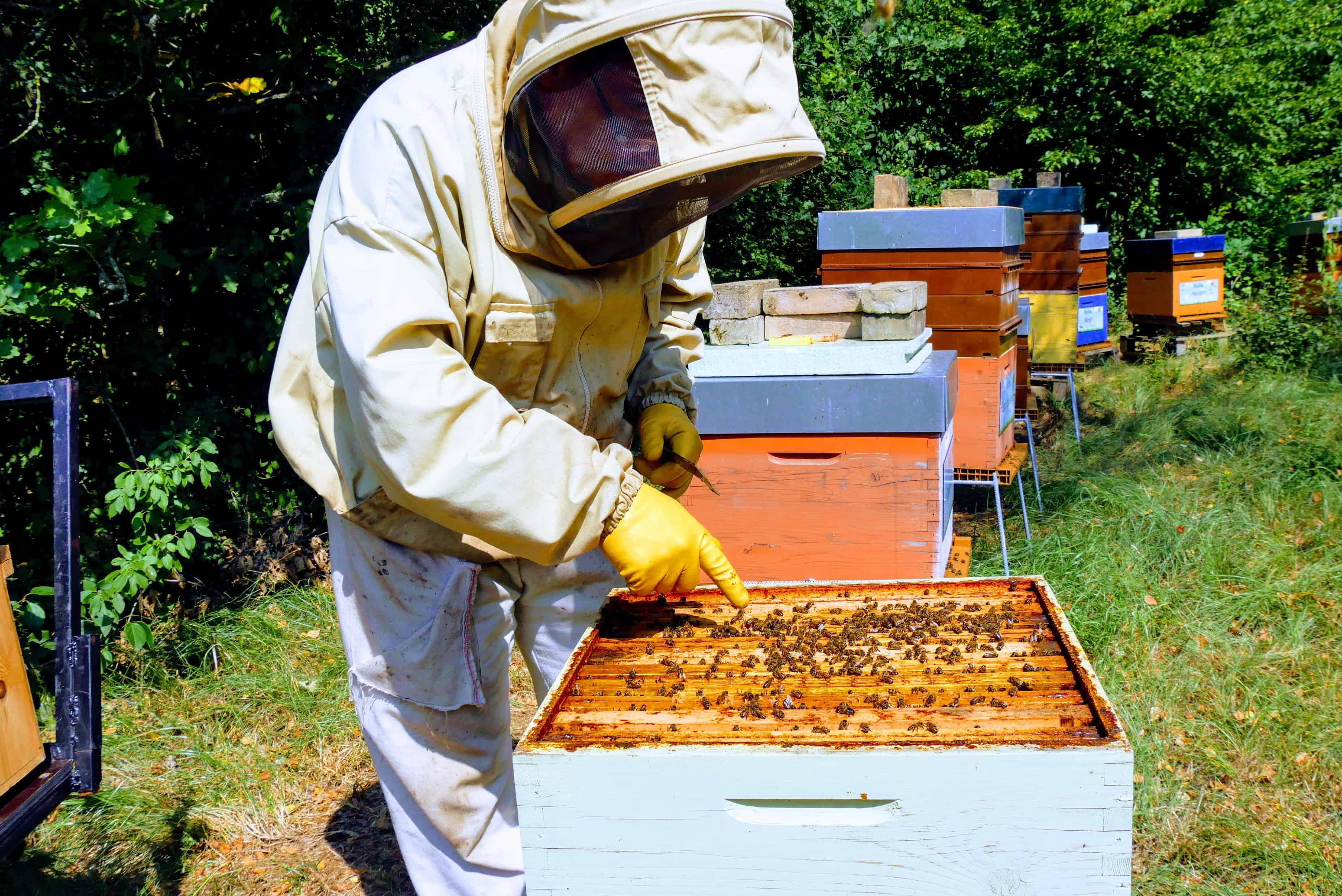 Wordbee-Beehive-2018-3