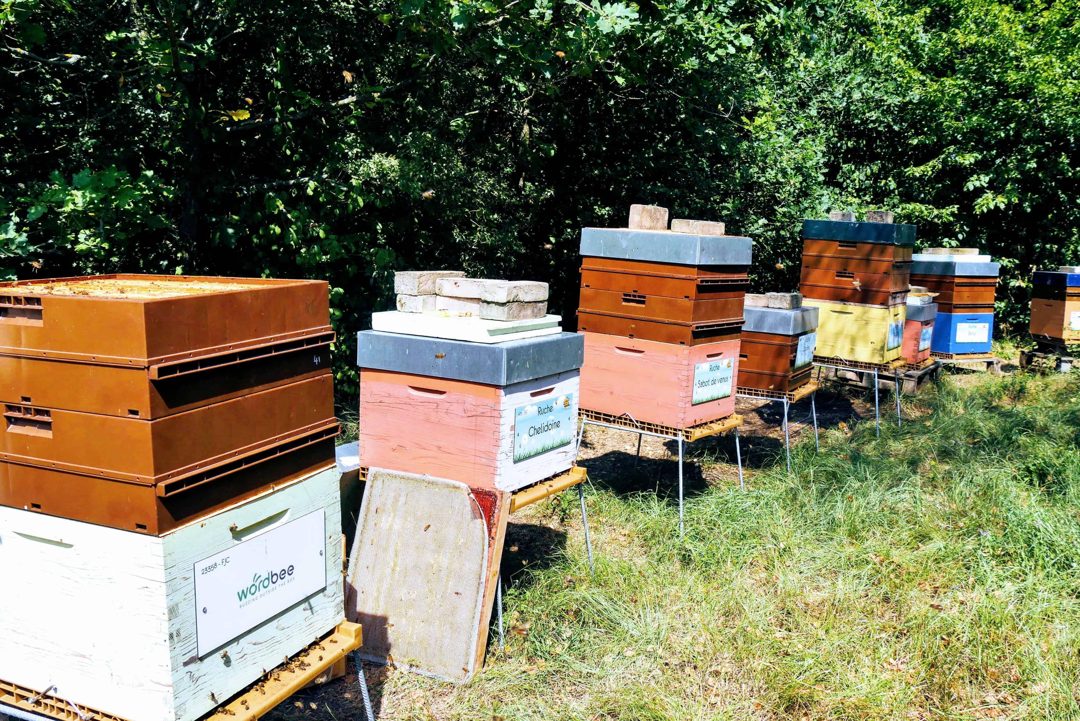 Wordbee-Beehive-2018-5